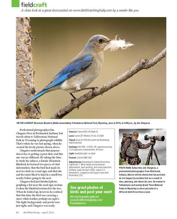 BirdWatching Magazine